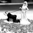 - e' più facile sposarsi male che mangiare bene - sposati e vedrai, perderai il sonno e più non dormirai - al mulino e alla sposa manca sempre qualche cosa...